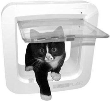 Микрочип помог коту вернуться домой через 5 лет