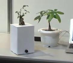 Японцы научили растения выражать эмоции