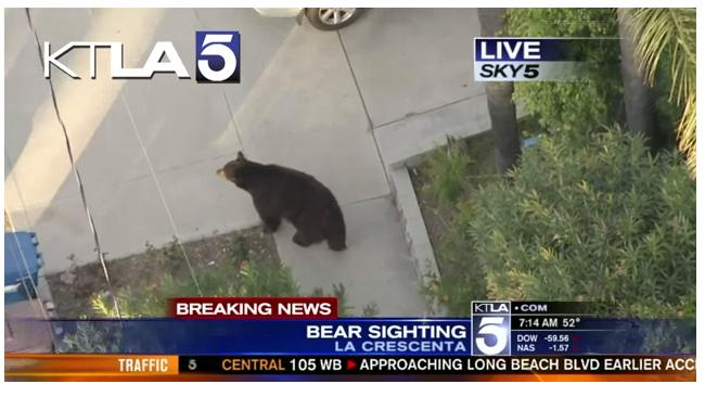 Отправка SMS на ходу может привести… прямо в лапы медведя