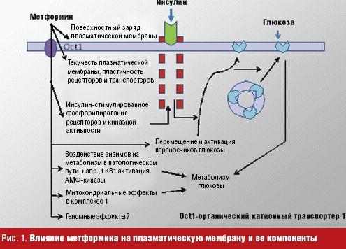 Метформин пролонгированного действия — новый шаг в лечении ...