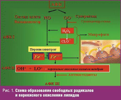 Рис. 1. Схема образования свободных радикалов и перекисного окисления липидов