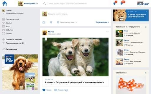 Одноклассники запустили соцсеть для домашних животных
