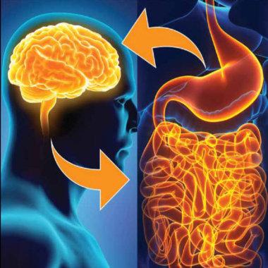 Кишечно-мозговая ось, микрофлора кишечника и их связь с развитием ожирения (часть 1)