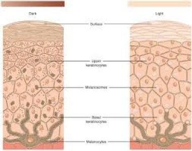 Дермальные меланоцитозы
