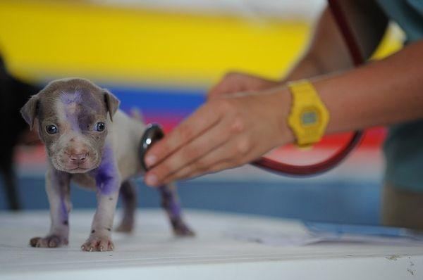 Компания Mars запустила сервис онлайн-консультаций с ветеринарами
