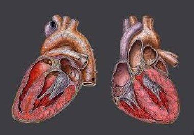 Проблема функциональной детренированности сердца у современной студенческой молодежи: конституциональный подход в диагностике и альтернативные вариант