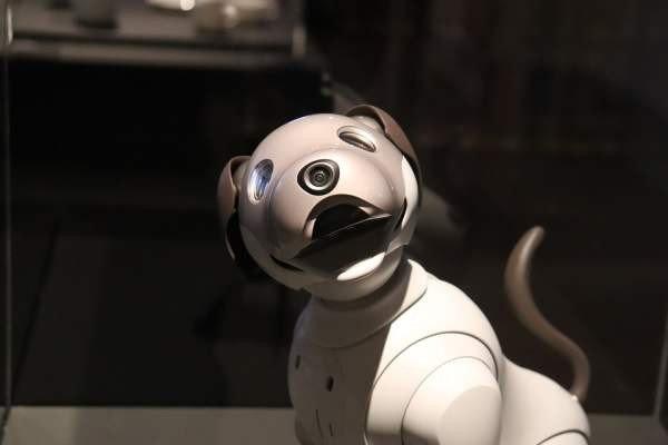 В России создадут робота-собаку для транспортировки грузов