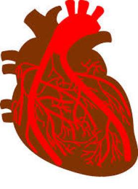 Особенности ангиографии и структурно-функционального состояния миокарда у пациентов с острым коронарным синдромом и заболеваниями верхних отделов желу