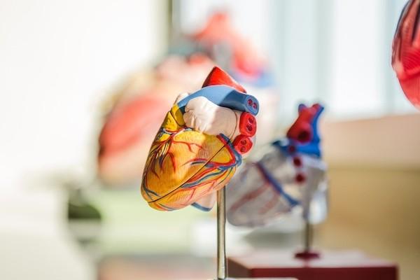 Биомеханическое сердце облегчит испытания искусственных клапанов