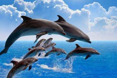 Робот-дельфин сделает шоу гуманнее
