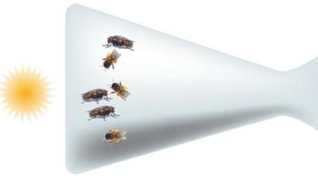 Умнее — не всегда значит лучше. Если поместить в бутылку пчел и мух, а затем повернуть бутылку донышком к источнику света, пчелы, которые считаются умнее, устремятся к свету, разобьются о стекло и погибнут, в то время как более глупые мухи вылетят из бутылки через пару минут. Не кажется ли вам эта метафора подходящей для стратегий тестирования?