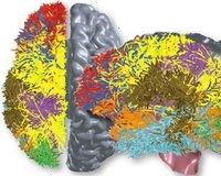 Наряду с моделированием деятельности коры головного мозга кошки инженеры IBM разработали новый алгоритм BlueMatter, позволяющий составить схему связей между корой и подкоркой человеческого мозга
