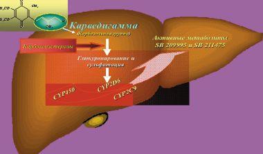 Рис. 2. Схема метаболизма карведилола (Карведигаммы®)