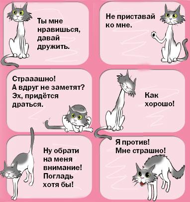 У кошки отчего у кошки камни в