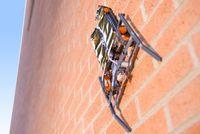 Электростатическое притяжение оказывается достаточным для того, чтобы робот, снабженный такого рода гусеницами, мог преодолеть вертикальную стену