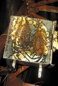 Колония ос вкачестве места для своего гнезда выбрала точку доступа Wi-Fi, установленную на старой телевизионной башне, что вызвало короткое замыкание