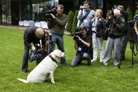 Разработчики при помощи пса Шелдона продемонстрировали возможности ошейника, оснащенного приемником ГЛОНАСС-GPS