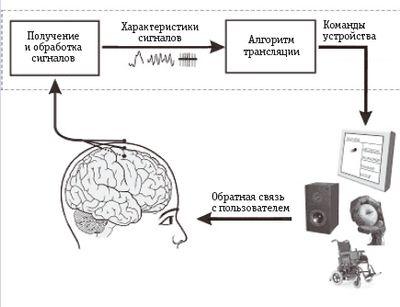 Базовая схема и функционирование системы BCI. Электроды, размещенные на коже головы или внутри головы, получают сигналы от мозга, а BCI обрабатывает эти сигналы для извлечения конкретных характеристик, отражающих намерения индивида и транслирует эти характеристики в команды, управляющие устройством, например текстовым редактором, синтезатором речи, роботизированной рукой или инвалидной коляской