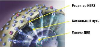 deystvie-spermatozoidov-posle-himioterapii